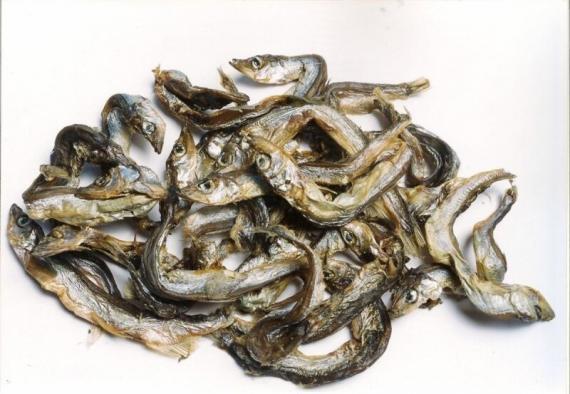 pesciolini secchi per cani