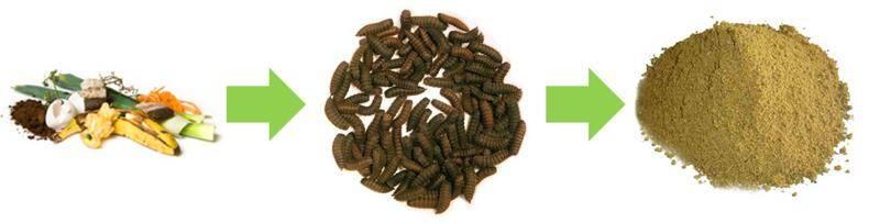 cibo-per-cani-con-farina-di-insetti